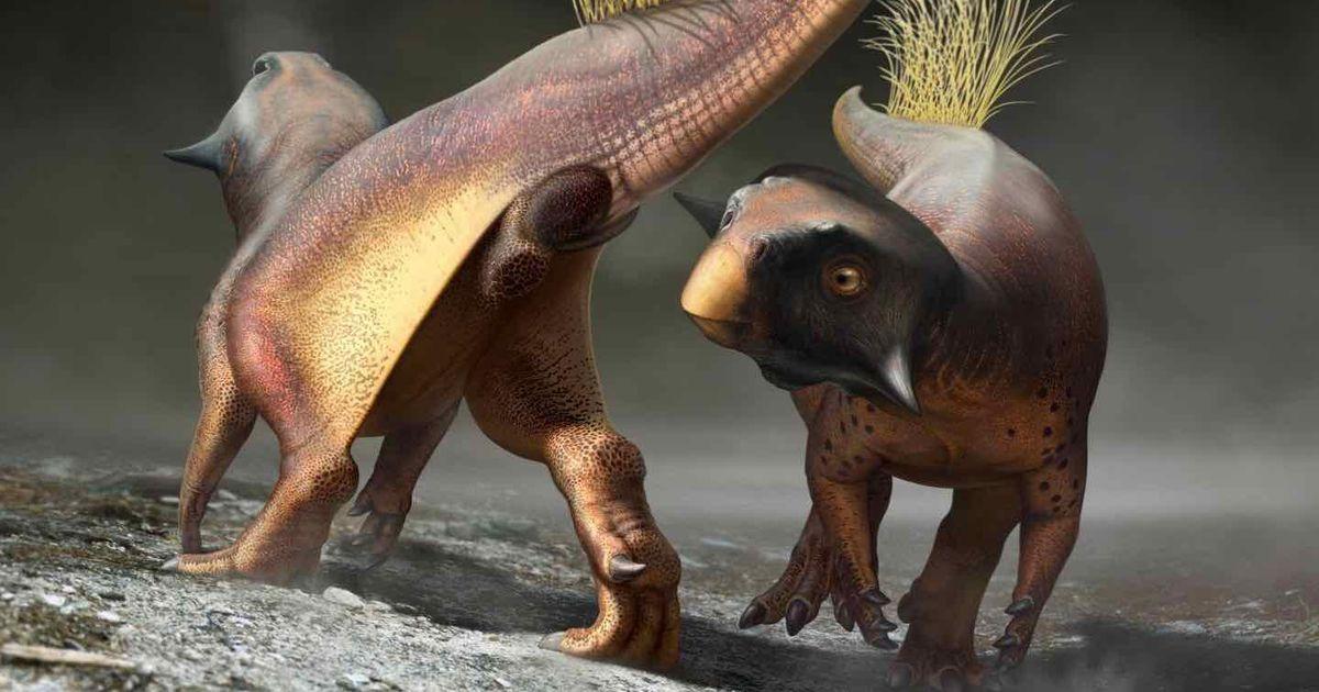 Paleontologists finally get their first good look at a dinosaur butt