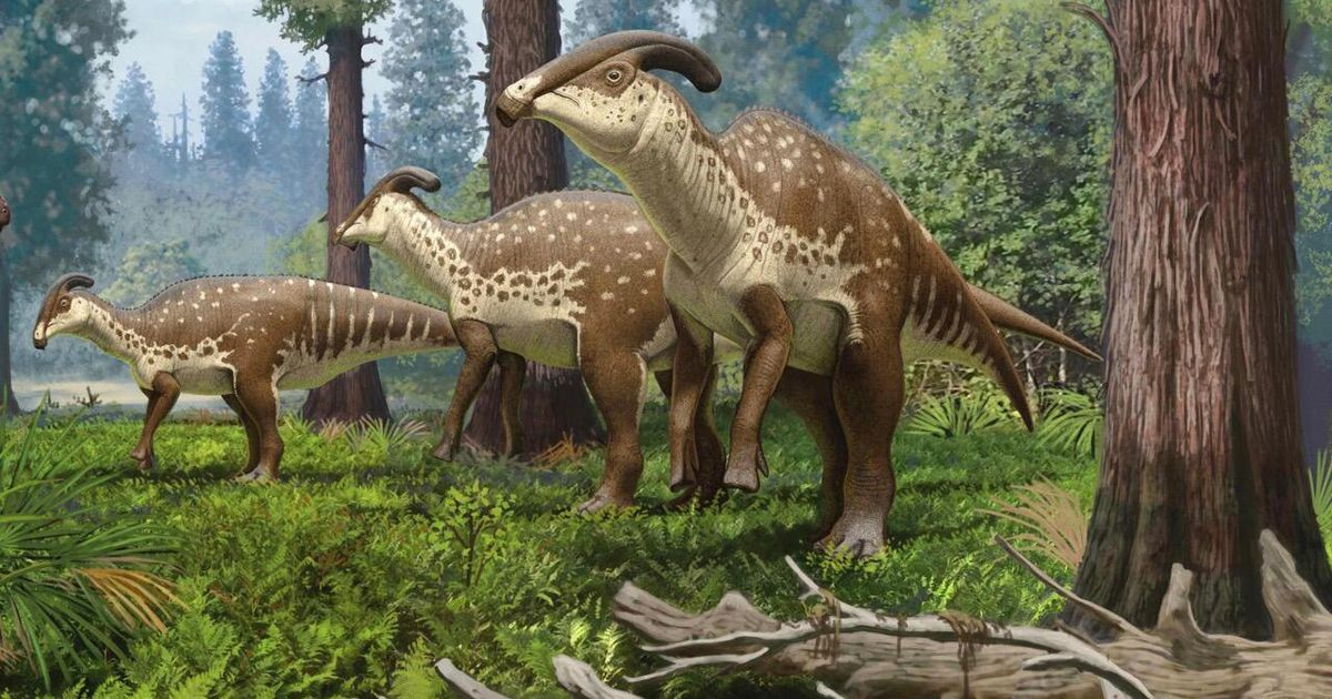 A rare dinosaur skull sheds light on the creature's strange hollow head tube